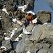 Kletterei in gutem Fels