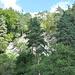 Die Faltung wird heute von nachgewachsenen Bäumen und Sträuchern teilweise verdeckt.