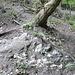 Gipsstein schimmert auch hier durchs dünne Erdreich.