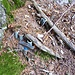 Cauradisc - Heringe und Hammer für das Tarp von Jägern bereitgestellt