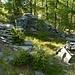 Corte di cima der Alpe Cauradisc 1730m