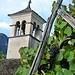 Rovana - Kirche und reife Trauben