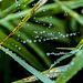 Sogar die Spinnweben tragen Wassertropfen