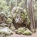 Der Vor- und Hauptgipfel des Hohensteins