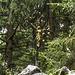 Das Gipfelkreuz vom Vorgipfel aus