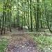 Abstiegsweg vom Hohenstein