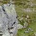 Klettergarten.<br />Hier wird in Steinen geklettert, die am Charenstock abgebrochen sind.