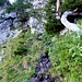Geissentritt am Aufstieg zum Rautispitz