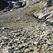 Bergschafe im Kar