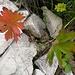 Herbst und Sommer liegen (oder stehen) dicht beieinander
