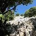 Karst und Steineichen
