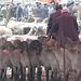 Kashgar-Viehmarkt