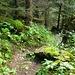 Man merkt noch deutlich unterhalb der Waldgrenze zu sein. :) -  Unterwegs ins Parseiertal (ca. 1700m).