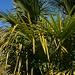 Wandern unter Palmen und blauem Himmel im Schutz der Alpen!
