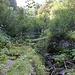 Kleine Brücke in wildromantischer Umgebung