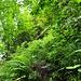Urwald wie man ihn selten findet