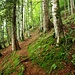Toller Wald