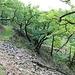 Hang mit Blockwerk und Magerbewaldung
