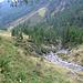 Presso l'Alpe del Gabbio.