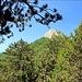 vom bewaldeten Rücken blicken wir zum Gipfel