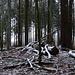 Der höchste Punkt des Thurgauer Seerückens: Nicht gerade spektakulär, aber wenigstens mit einem Hauch von Winter...