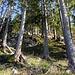 wegloser, etwas felsdurchsetzter, einfacher Aufstieg zum höchsten Punkt des Stockwald-Hubels