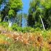 zu Beginn des Herbstes noch kräftiges Grün mit zarten Rot-Tönen
