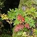 Herbstfarben im Wald.
