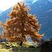 Herbstpracht oberhalb des Sumreger Hofs.