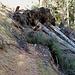 Schon am Beginn des Waldstückes im Mitteldorfergraben umgestürzte Bäume auf dem Weg. Weiter oben sollte das Ganze etwas chaotische Ausmaße annehmen.
