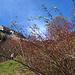 Hagebutten beim Aufstieg über die Gräshalden