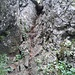 Der drahtseilgesicherte Kamin verlangt leichte Kraxelei (I-)