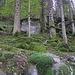 stupendo bosco ricoperto di muschio