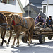 Ein Pferdefuhrwerk in den ukrainischen Waldkarpaten.