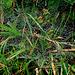 Wassertropfen gefangen in Spinnweben