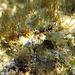 Auf den mit Algen bewachsenen Felsen am Ufer sieht man ganz viele, sehr kleine Fische, wenn man genau hinsieht: die Schleimfische.<br /><br />Sulle rocce coperte di alghe si vede dei pesci piccolissimi, se si quarda bene. Le bavose.