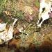 Dieser Schleimfisch versteckt sich nachts in einer Felsnische.<br /><br />Questa bavosa si nasconde di notte in una fissura delle scoglie.