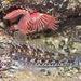 Eine Grundel hat sich zu den Kalkröhrenwürmern schlafen gelegt.<br /><br />Un ghiozzo si ha messo vicino al verme rosso in una fissura delle rocce per dormire.