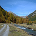 Herbst im Val Susauna