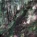 auch im Wald war es glatt auf dem schmalen Pfad
