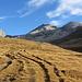 Aufstieg: Üppige Vegetation auf 2700m (Gipfel in der Bildmitte ist das Platthorn)