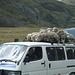 Ungewöhnlicher Transport von Schafen.