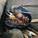 Frittierte Meerschweinchen.