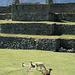 Lamas auf dem Hauptplatz von Machu Picchu.