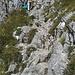 Der Kletterstieg ist wirklich leicht, macht aber trotzdem Spaß