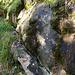 Im Abstieg zum Drahtsteg ... hier hat sich das Wasser eine eigene Suone / Waal geschaffen...