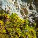 herbstliche Farben - sowohl in den Steinen als auch bei den Pflanzen