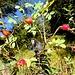 farbenfrohe Herbststimmung