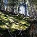 ... und weiter, weglos durch Moos und Wald ...