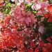 Lieber [u marmotta], diese Blumen sind nur für dich! Weil, durch die Blume gesprochen: schöne Tour war das heute, aaaaaber hinter den sieben Bergen und nicht bei den 7 Zwergen gibt es Touren, die sind 1000 mal schöner!!! :-))<br />Freu mich schon auf die näxte gemeinsame Tour!!! Ehrlich!!!!